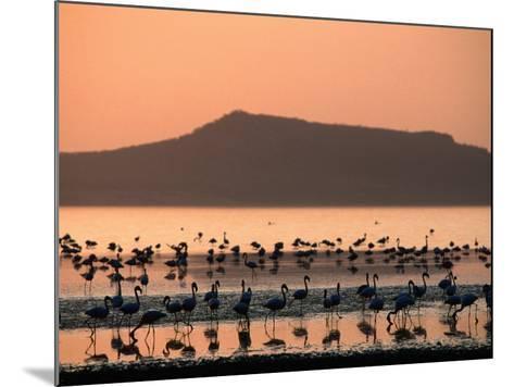 Flamingos Silhouetted in Lake Abiata, Abiyata-Shala National Park, Oromia, Ethiopia-Ariadne Van Zandbergen-Mounted Photographic Print