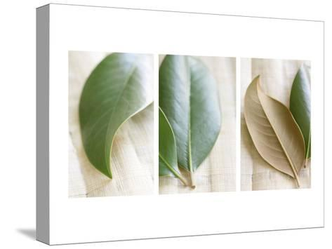 Leaves and Muslin Triptych--Stretched Canvas Print