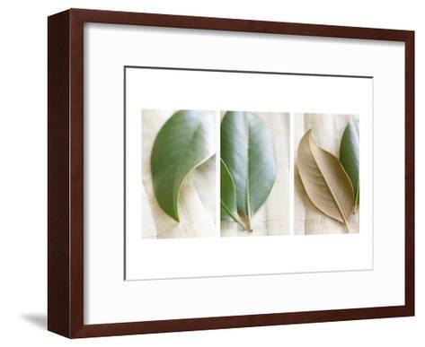 Leaves and Muslin Triptych--Framed Art Print