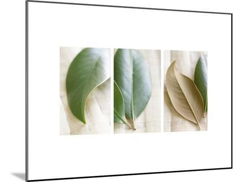 Leaves and Muslin Triptych--Mounted Photo