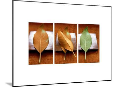 Leaves Arrangement Triptych--Mounted Photo