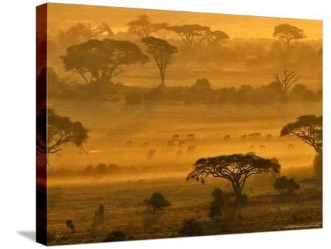 Herbivores at Sunrise, Amboseli Wildlife Reserve, Kenya-Vadim Ghirda-Stretched Canvas Print