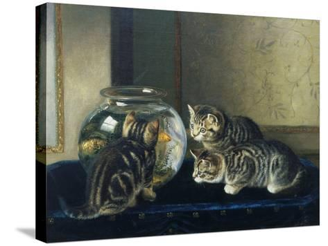 Three Kittens Watching Goldfish-Horatio Henry Couldery-Stretched Canvas Print