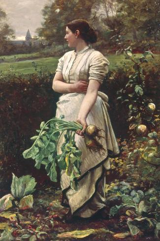 Picking Turnips-Robert Crawford-Stretched Canvas Print
