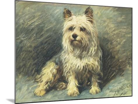 Yorkie-John Emms-Mounted Giclee Print
