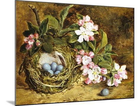 Apple Blossom and a Bird's Nest-H. Barnard Grey-Mounted Giclee Print