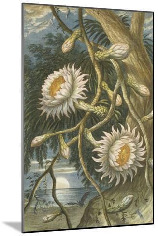 Night-Flowering Cactus, c.1874--Mounted Giclee Print