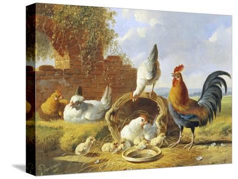 Spring Chickens-Albertus Verhosen-Stretched Canvas Print