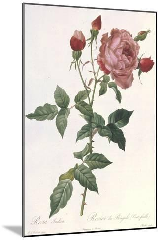 Bouquet of Rose, Anemone and Clematis-Pierre-Joseph Redout?-Mounted Giclee Print