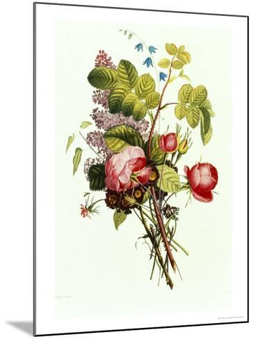 Bouquet of Rose, Lilac and Auricula-Jean Louis Prevost-Mounted Giclee Print