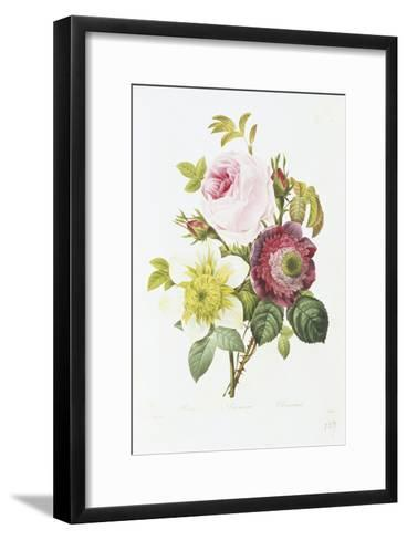 Study of Pink Roses and Convulvulus-Pierre-Joseph Redout?-Framed Art Print