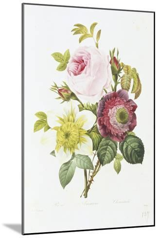 Study of Pink Roses and Convulvulus-Pierre-Joseph Redout?-Mounted Giclee Print