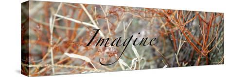 Imagine: Colorful Brush-Nicole Katano-Stretched Canvas Print
