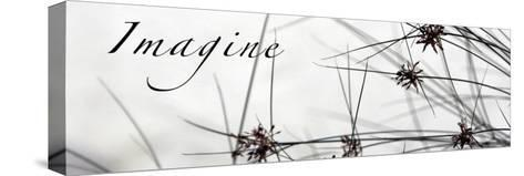 Imagine: Sweet Grass-Nicole Katano-Stretched Canvas Print