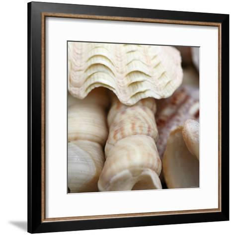 Shells I-Nicole Katano-Framed Art Print