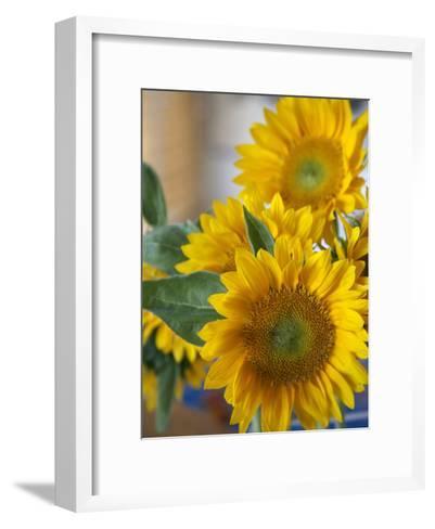 Sunny Sunflower II-Nicole Katano-Framed Art Print