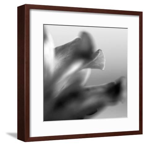 Petal Closeup III-Nicole Katano-Framed Art Print