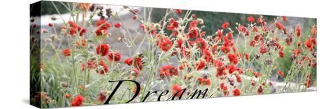 Dream Flowers I-Nicole Katano-Stretched Canvas Print
