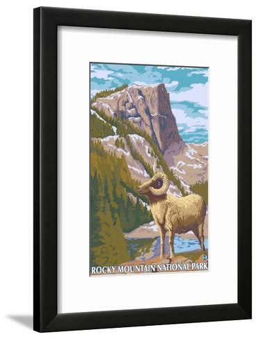Big Horn Sheep, Rocky Mountain National Park-Lantern Press-Framed Art Print