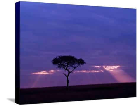 Sunrise, Maasai Mara, Kenya-Joe Restuccia III-Stretched Canvas Print