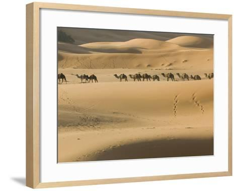 Camel Caravan on the Erg Chebbi Dunes, Merzouga, Tafilalt, Morocco-Walter Bibikow-Framed Art Print