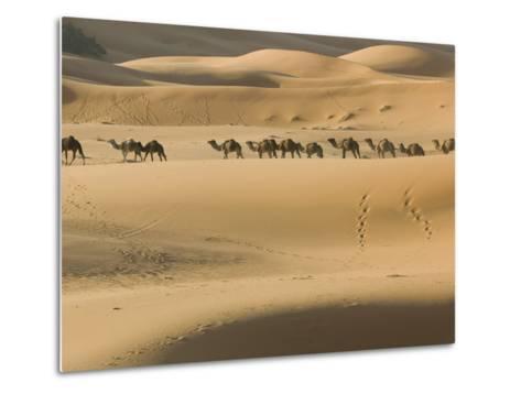 Camel Caravan on the Erg Chebbi Dunes, Merzouga, Tafilalt, Morocco-Walter Bibikow-Metal Print