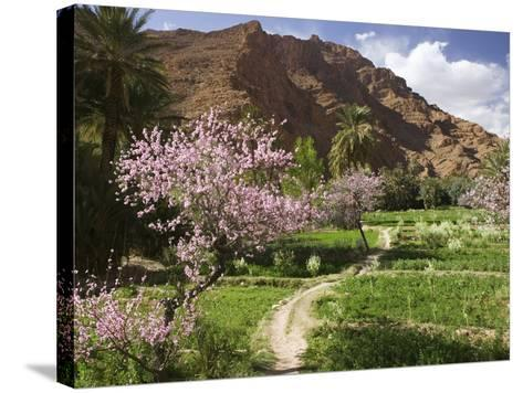 Spring Blooms, Todra Gorge Area, Morocco-Walter Bibikow-Stretched Canvas Print
