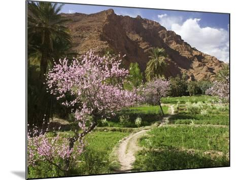 Spring Blooms, Todra Gorge Area, Morocco-Walter Bibikow-Mounted Photographic Print