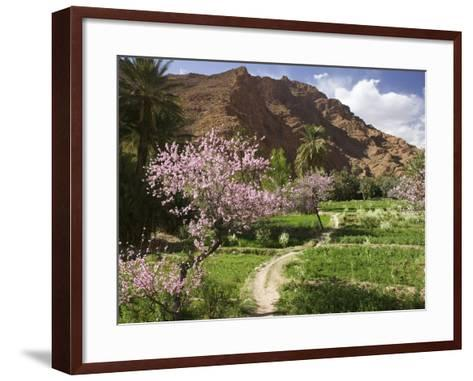 Spring Blooms, Todra Gorge Area, Morocco-Walter Bibikow-Framed Art Print