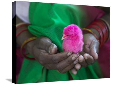 Woman and Chick Painted with Holy Color, Orissa, India-Keren Su-Stretched Canvas Print