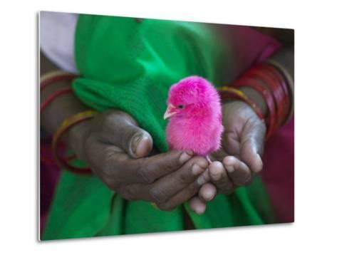 Woman and Chick Painted with Holy Color, Orissa, India-Keren Su-Metal Print