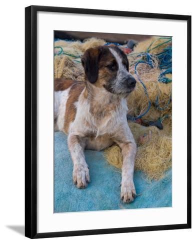 Dog Resting Along the Harbor in Kusadasi, Aegean Sea, Turkey-Darrell Gulin-Framed Art Print