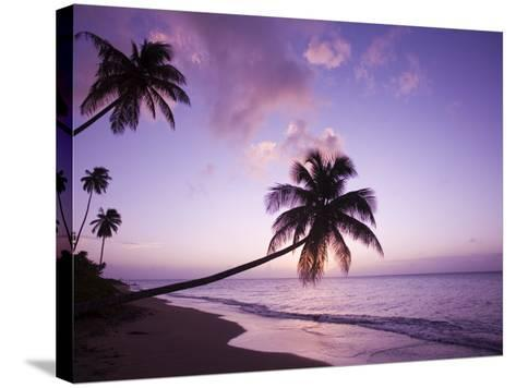Palm Trees at Sunset, Coconut Grove Beach at Cade's Bay, Nevis, Caribbean-Greg Johnston-Stretched Canvas Print