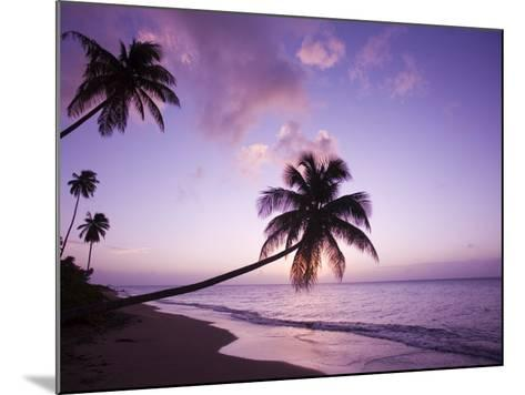 Palm Trees at Sunset, Coconut Grove Beach at Cade's Bay, Nevis, Caribbean-Greg Johnston-Mounted Photographic Print