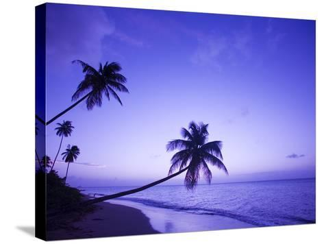 Lone Palm Trees at Sunset, Coconut Grove Beach at Cade's Bay, Nevis, Caribbean-Greg Johnston-Stretched Canvas Print