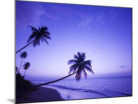 Lone Palm Trees at Sunset, Coconut Grove Beach at Cade's Bay, Nevis, Caribbean-Greg Johnston-Mounted Photographic Print