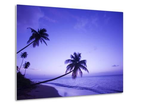 Lone Palm Trees at Sunset, Coconut Grove Beach at Cade's Bay, Nevis, Caribbean-Greg Johnston-Metal Print