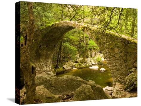 Genoan Bridge in Vegetation of Gorges De Spelonca, Ponte De Zaglia, Corsica, France-Trish Drury-Stretched Canvas Print