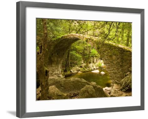 Genoan Bridge in Vegetation of Gorges De Spelonca, Ponte De Zaglia, Corsica, France-Trish Drury-Framed Art Print