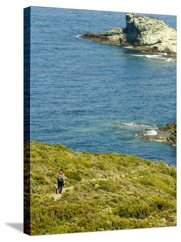 Blooming Maquis Along Rugged Mediterranean Coastline, Le Sentier Des Douaniers, Cap Corse-Trish Drury-Stretched Canvas Print