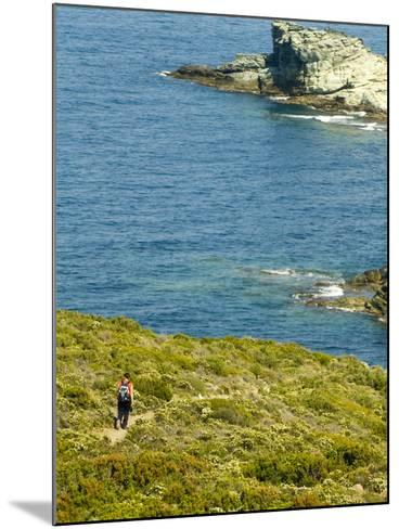 Blooming Maquis Along Rugged Mediterranean Coastline, Le Sentier Des Douaniers, Cap Corse-Trish Drury-Mounted Photographic Print
