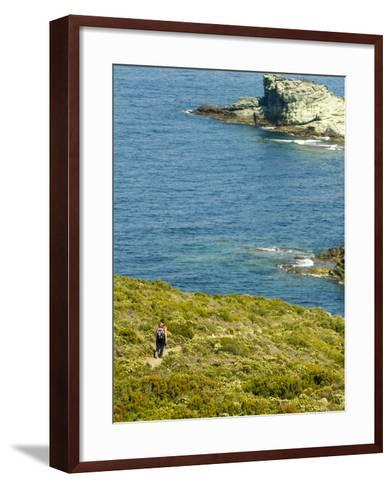 Blooming Maquis Along Rugged Mediterranean Coastline, Le Sentier Des Douaniers, Cap Corse-Trish Drury-Framed Art Print