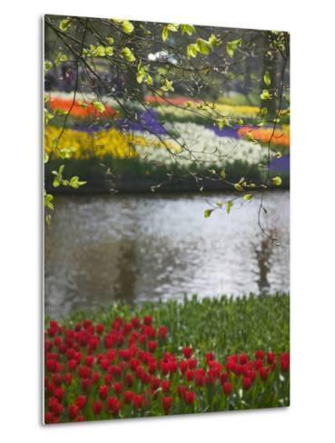 Tulips in Keukenhof Gardens, Amsterdam, Netherlands-Keren Su-Metal Print