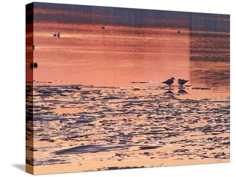 Evening View at Sunset Over Ice Covered Riddarfjarden Water, Stockholm, Sweden-Per Karlsson-Stretched Canvas Print
