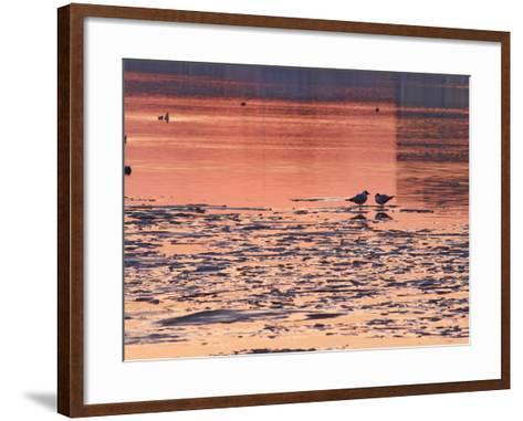 Evening View at Sunset Over Ice Covered Riddarfjarden Water, Stockholm, Sweden-Per Karlsson-Framed Art Print