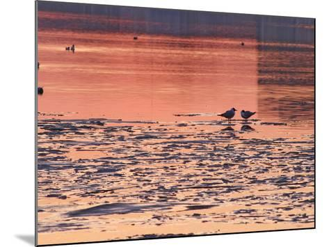 Evening View at Sunset Over Ice Covered Riddarfjarden Water, Stockholm, Sweden-Per Karlsson-Mounted Photographic Print