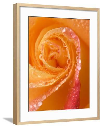Rose Close-up with Dew-Nancy Rotenberg-Framed Art Print