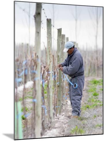 Vineyard Worker, Bodega Nqn Winery, Vinedos De La Patagonia, Neuquen, Patagonia, Argentina-Per Karlsson-Mounted Photographic Print