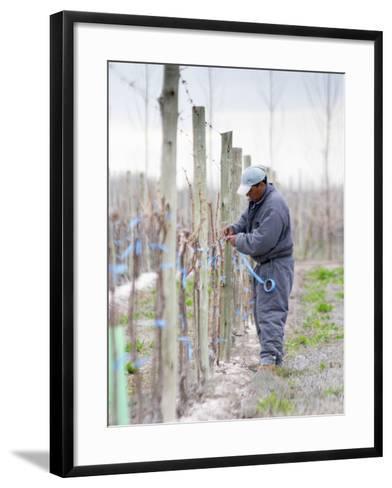 Vineyard Worker, Bodega Nqn Winery, Vinedos De La Patagonia, Neuquen, Patagonia, Argentina-Per Karlsson-Framed Art Print