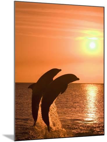 Bottlenose Dolphins, Caribbean Sea-Stuart Westmoreland-Mounted Photographic Print